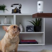 Best Wireless Home Security Cameras